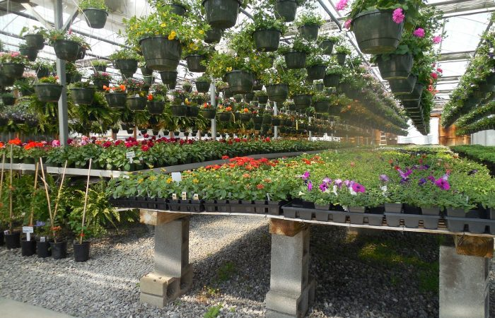 Choosing The Best Flowers From A Local Florist